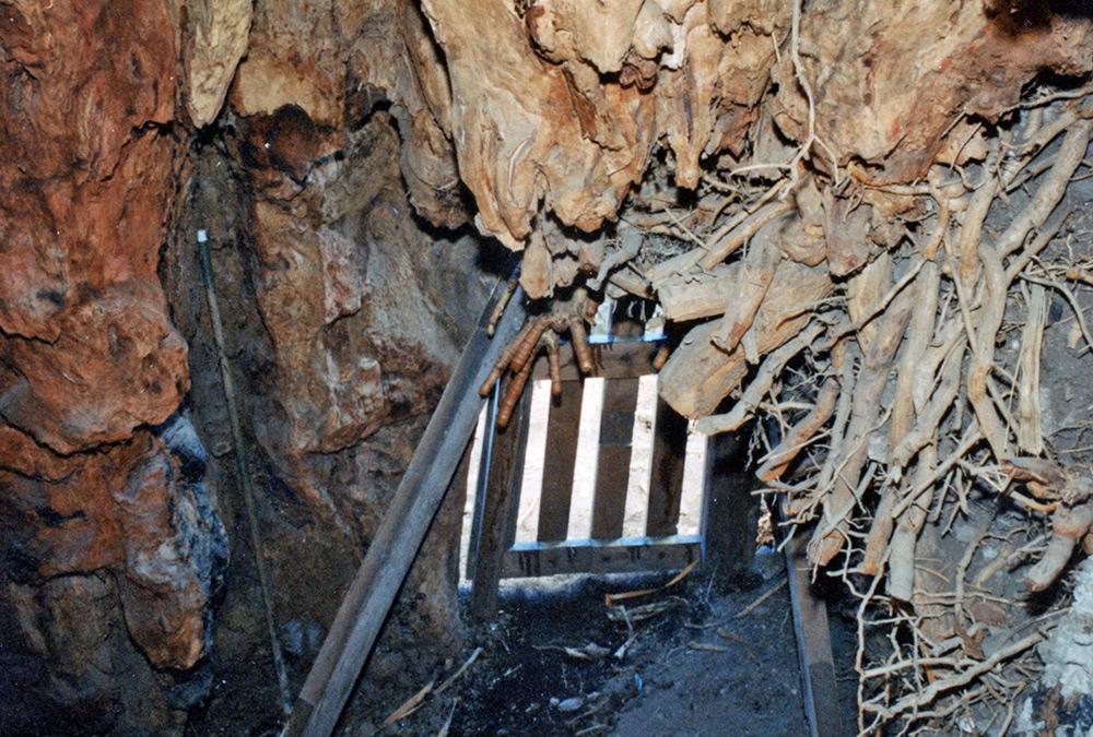 Foto/Dibujo 4: Caverna del drago con la pared del tronco abierta. (Foto: Canters/Stoehrel)
